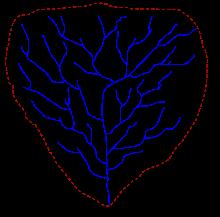 Схематическое изображение речного бассейна. Синими линиями показаны водотоки, коричневой пунктирной линией — граница бассейна (водораздел)